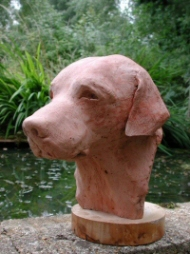 The same bust of a Labrador in terra cotta plaster - Click to see large bronze version